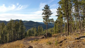 Black Hills Nature Tours